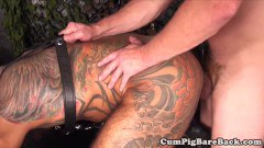 Grey wolf taken from behind after blowing dick