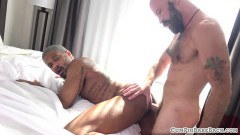 Bald bear has doggy-style anal sex with nubian gent